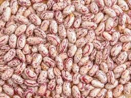 Фасоль от производителя оптом