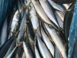 Frozen mackerel - photo 3