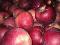 Яблоки apples - фото 2