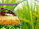 Pesticides manufacturer and supplier worldwide יצרן וספקי חו - photo 1