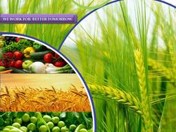 Pesticides manufacturer and supplier worldwide יצרן וספקי חו
